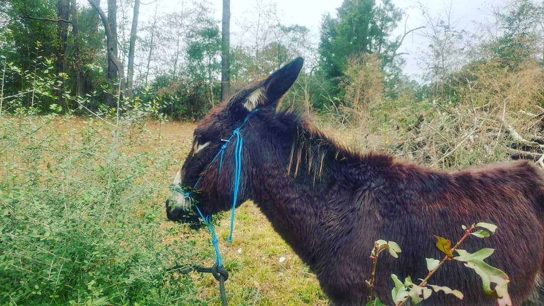 Hey Donkey – What's Going On?