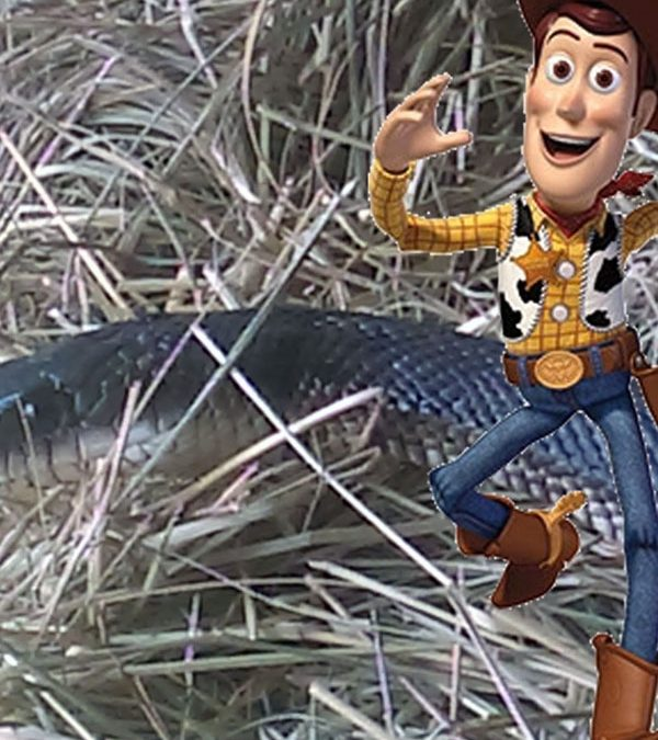 There's a SNAKE in my coop!